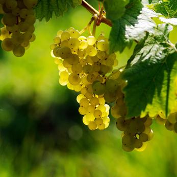 Une Hausse De La Production De Vin Française En 2013