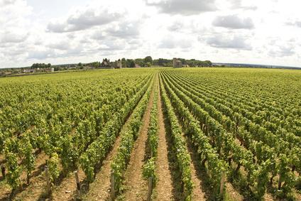 Les Ventes De Vins De Bourgogne Prennent De L'ampleur
