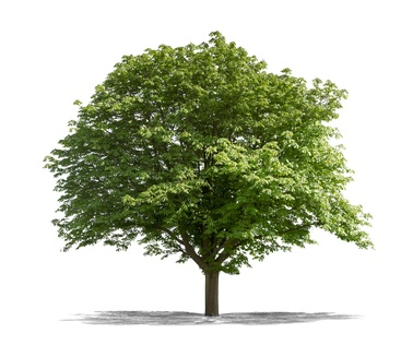 L'investissement Dans Les Bois Et Les Forets Pour Valoriser Son Patrimoine