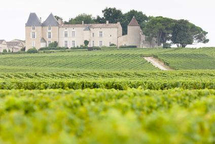 Le millésime 2011 du Château d'Yquem est une réussite