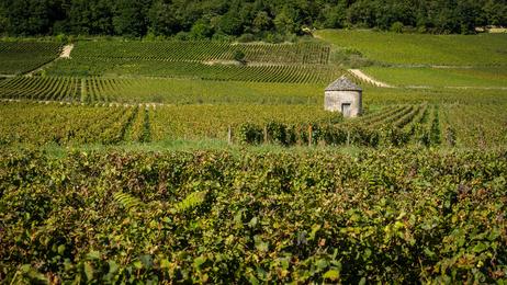 Bourgogne : Romanée-Conti un domaine prestigieux