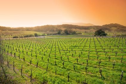 Succès Du Vin De Californie - Vallée De Sonoma