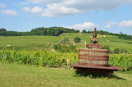 La Qualité Des Bouteilles De Bourgogne N'est Plus à Prouver