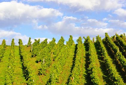 LVMH achète un vignoble en Bourgogne