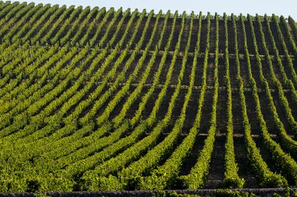 Vignobles de Bordeaux - Des achats significatifs