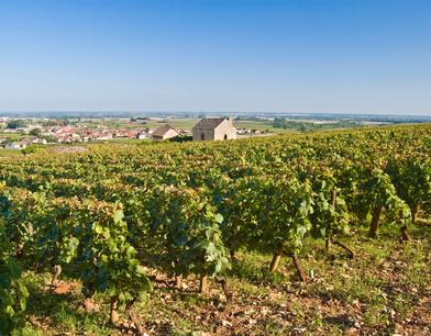 Des changements de propriétaires pour les vignobles de Bourgogne