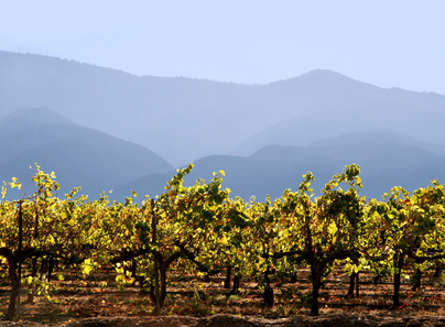Vendanges En Californie - Napa Valley