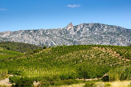 Vignoble Du Languedoc à Maury