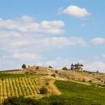 Vignoble de Bulgarie
