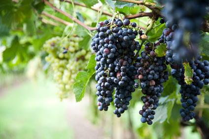 Une évolution nécessaire pour les campagnes de vente de vin en primeur