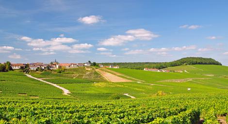 La Champagne pourrait être inscrite au Patrimoine Mondial de l'UNESCO