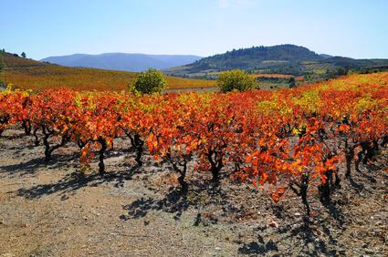 Faire un investissement dans les vins de Corbières