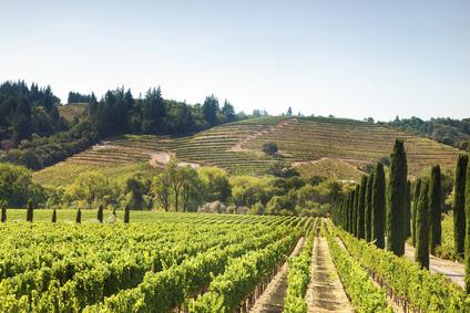 L'investissement dans les vignobles américains prend de l'ampleur