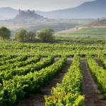 Vignoble de la Rioja en Espagne