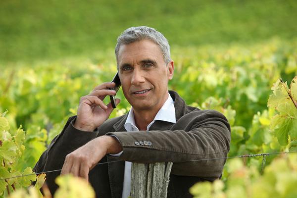 Investir Dans La Vigne, Le Foncier Toujours En Hausse