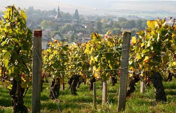 Le vignoble français de Bourgogne et de Champagne au patrimoine mondial